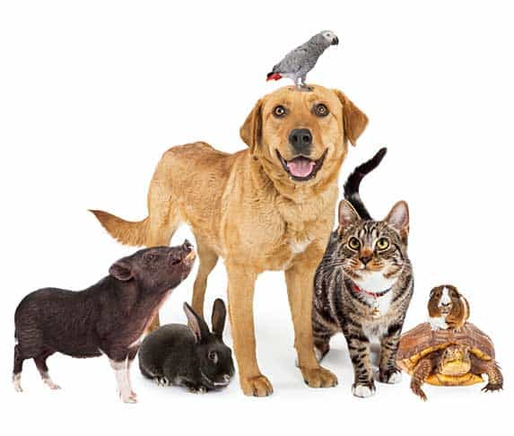 dog along with variety of animals