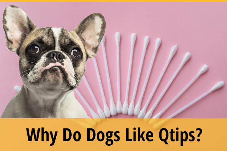 Why Do Dogs Like Q-Tips