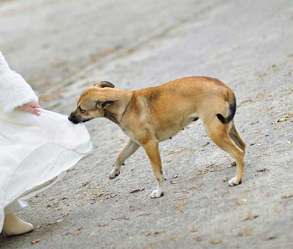 dog tearing up a white clothe