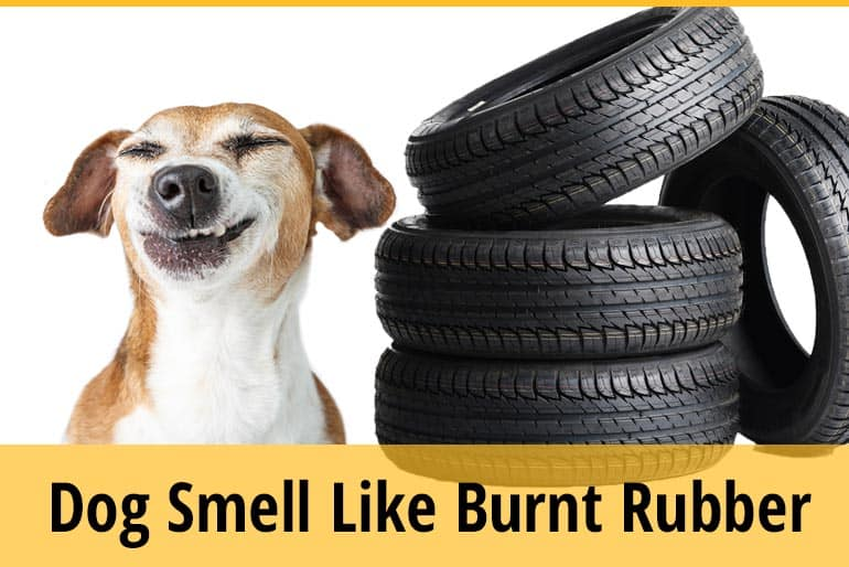Why Does My Dog Smell Like Burnt Rubber