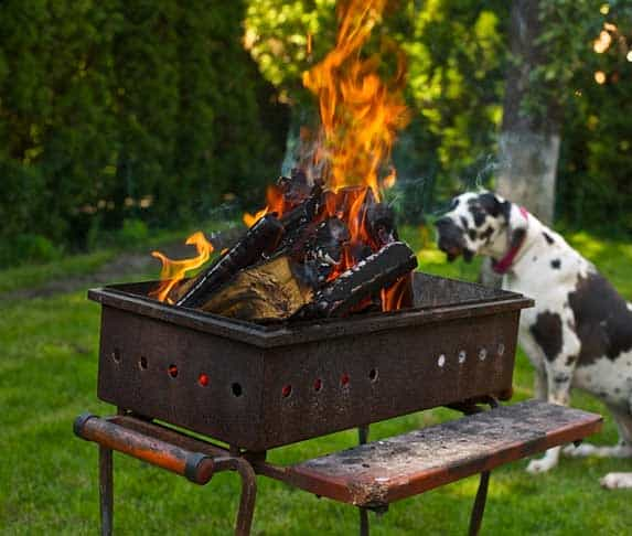 dog staring at the grill