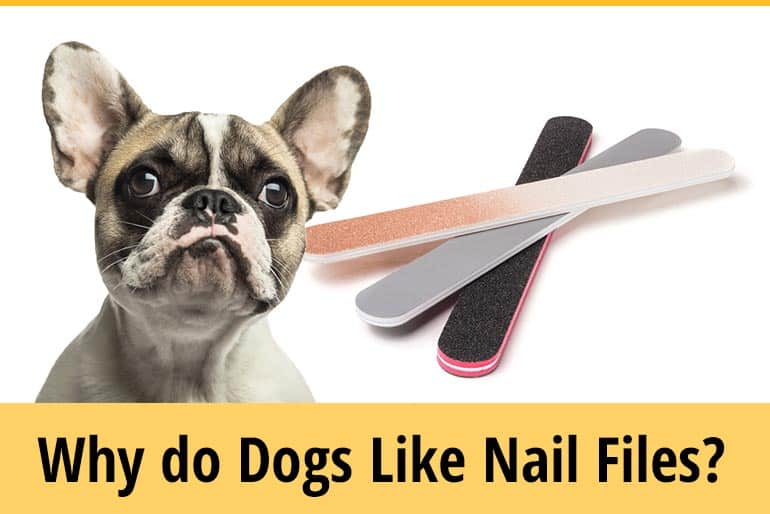 Why Do Dogs Like Nail Files