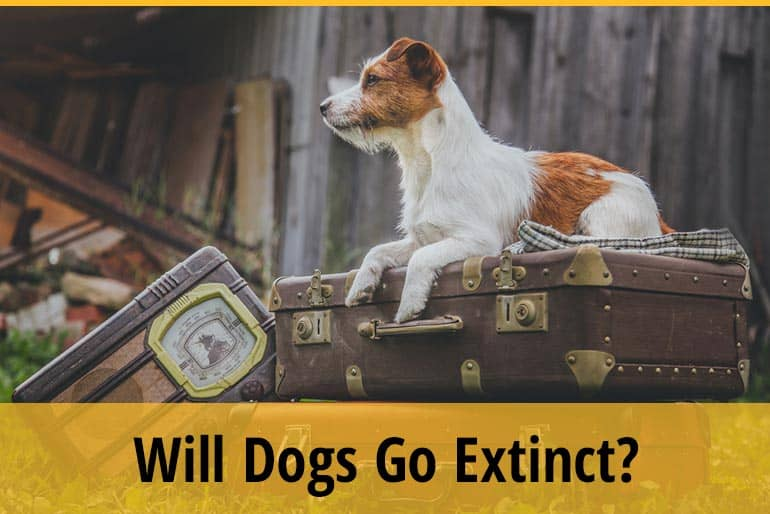 Will Dogs Go Extinct