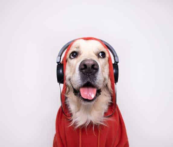 dog with earphone