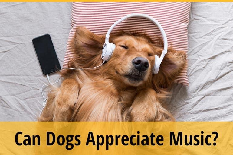 Can Dogs Appreciate Music