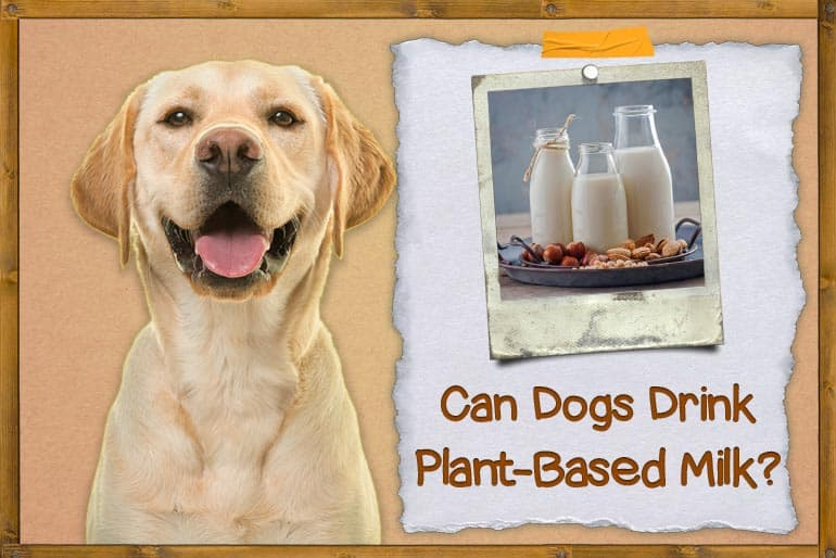 Can Dogs Drink Plant-based Milk