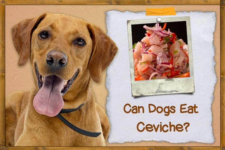 Can Dogs Eat Ceviche