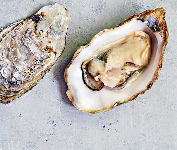 oyster for dogs