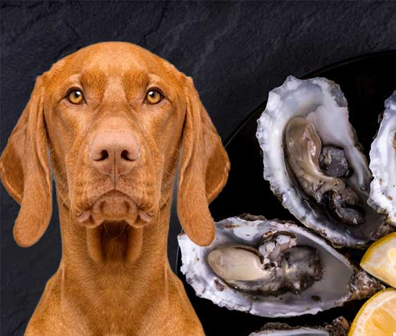 dog with oyster in background