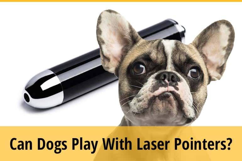 Can Dogs Play With Laser Pointers