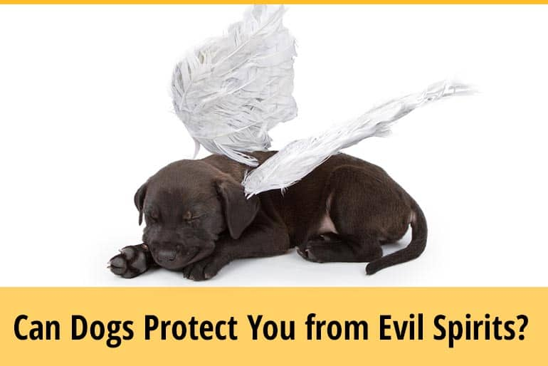 Can Dogs Protect You From Evil Spirits