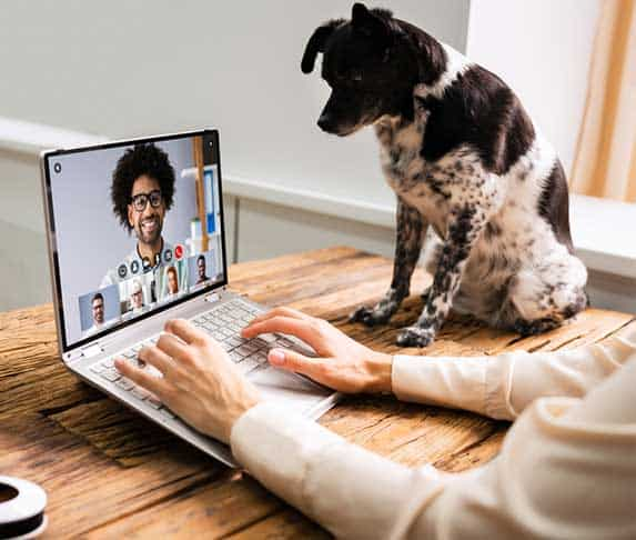 dog watching a video call