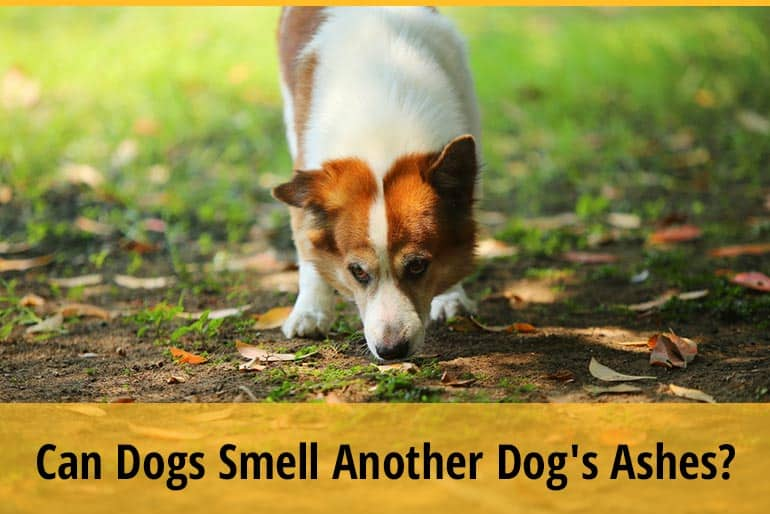 Can Dogs Smell Another Dog's Ashes