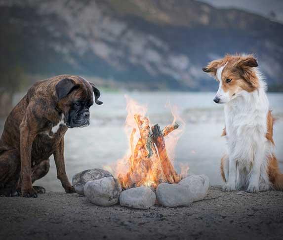 two dogs near bonfire
