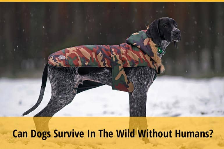 Can Dogs Survive In The Wild Without Humans