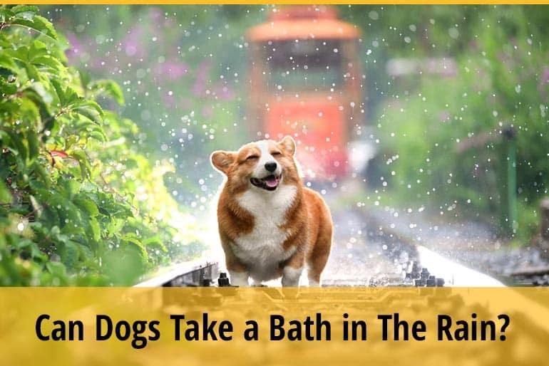 Can Dogs Take a Bath in The Rain