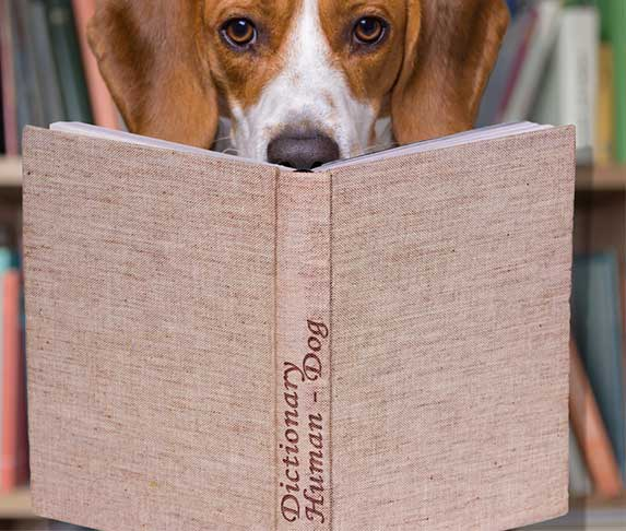 dog with dictionary