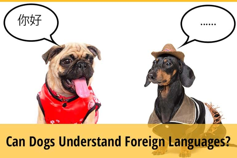 Can Dogs Understand Foreign Languages