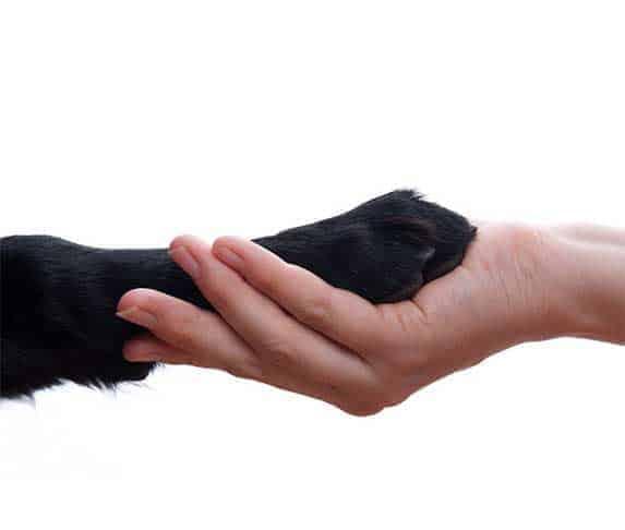 dog and human contact