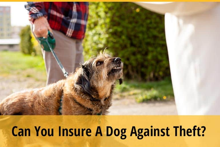 Can You Insure Your Dog Against Theft