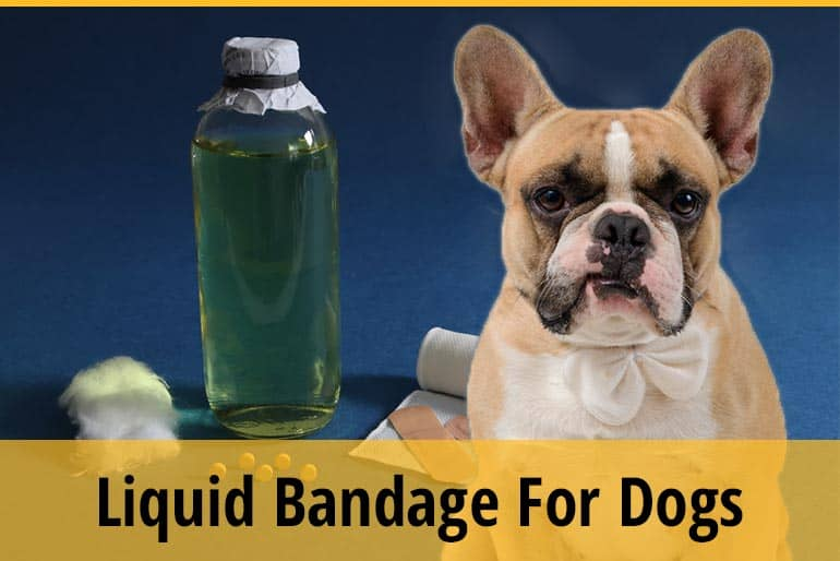 Can You Use Liquid Bandage on A Dog