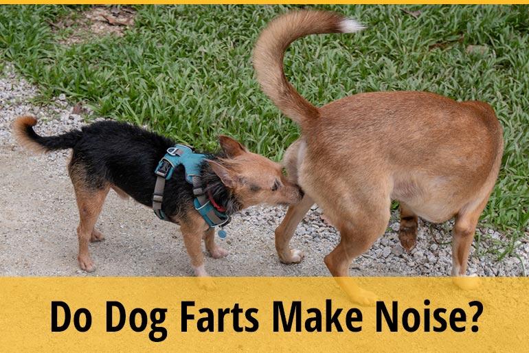 Do Dog Farts Make Noise