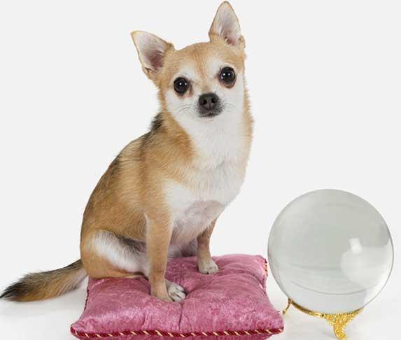 dog with a crystal ball