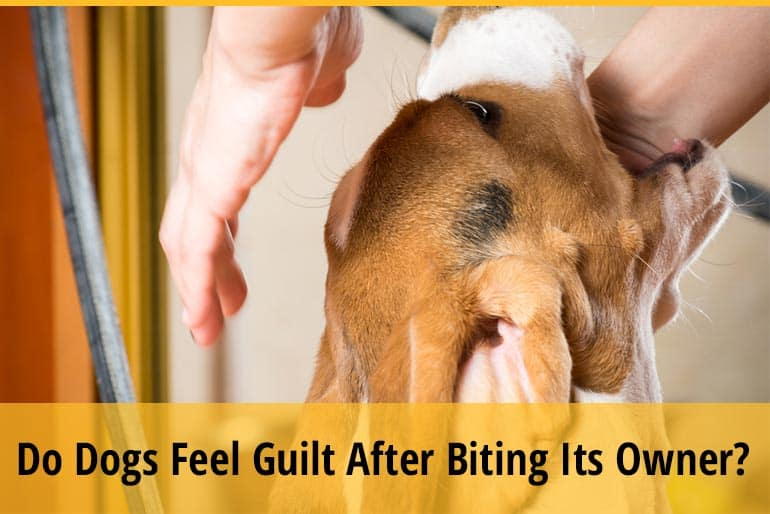 Do Dogs Feel Guilt After Biting Its Owner