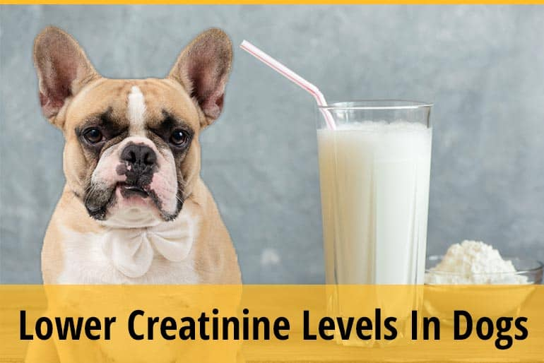 How To Lower Creatinine Levels In Dogs