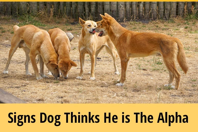 How To Tell If A Dog Thinks He's The Alpha