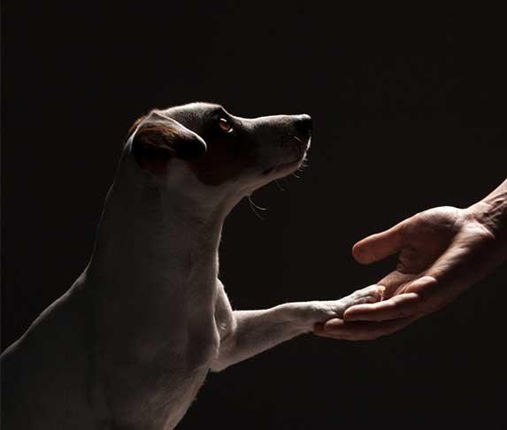 dog holding owner's han