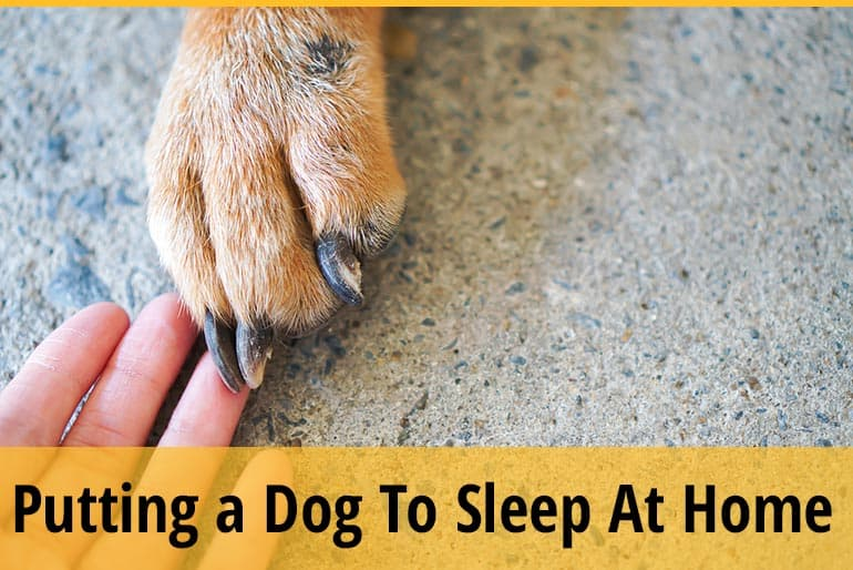 How to Put a Dog to Sleep at Home, Painlessly