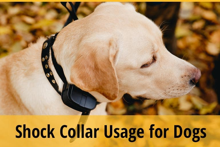 How To Use A Shock Collar For Dogs