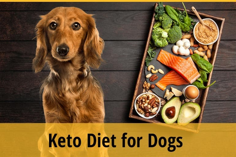 Keto Diet for Dogs