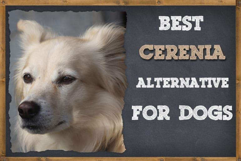 List of Alternatives To Cerenia For Dogs