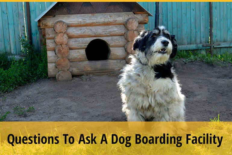 11 Questions To Ask A Dog Boarding Facility