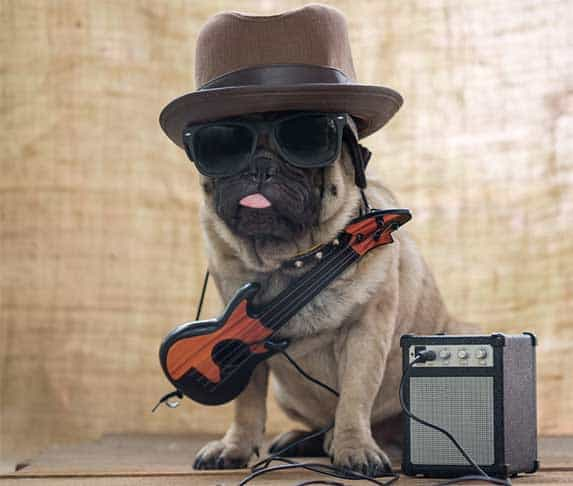 rock and roll dog