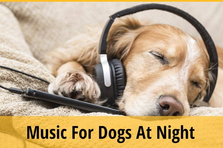 Should I Leave Music On For My Dog At Night