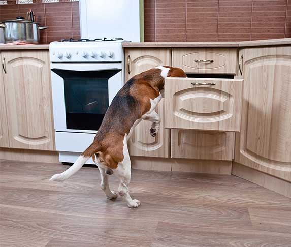 dog searching at kitchen