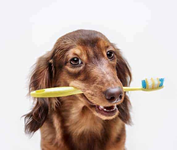 dog holding a tooth brush in its mouth