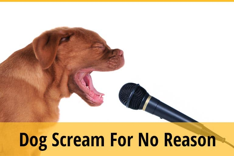 Why Does My Dog Scream for No Reason