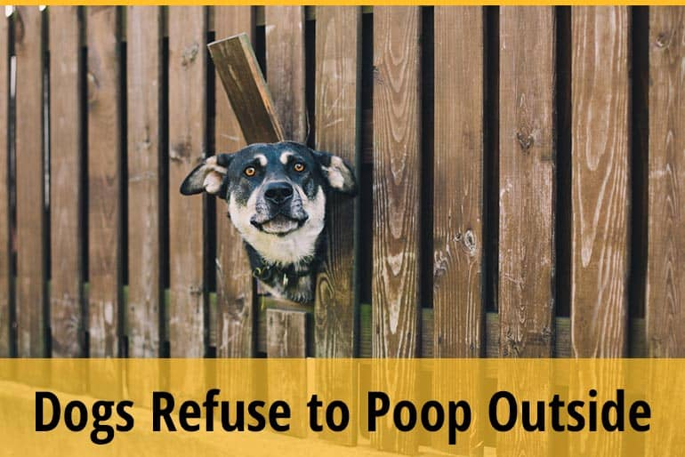 Why do Dogs Refuse to Poop Outside