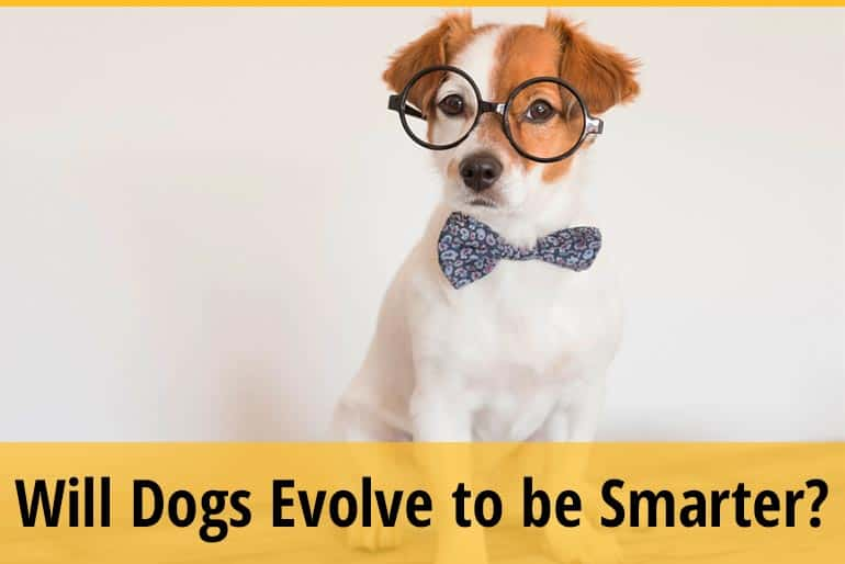 Will Dogs Evolve To Be Smarter