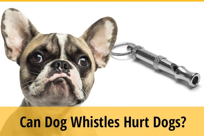 Can Dog Whistles Hurt Dogs
