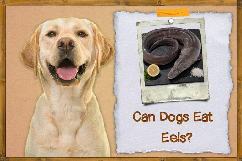 Can Dogs Eat Eel