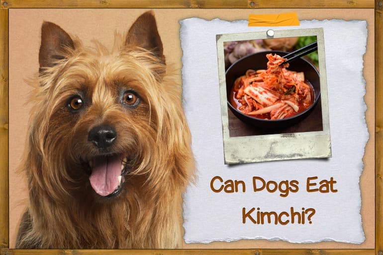 Can Dogs Eat Kimchi