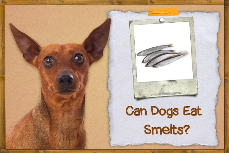 Can Dogs Eat Smelts