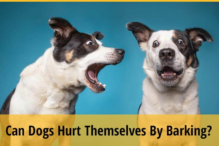 Can Dogs Hurt Themselves By Barking Too Much