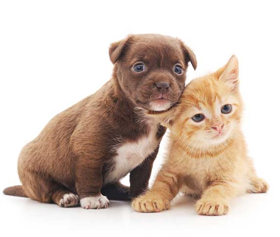 a puppy and a kitten