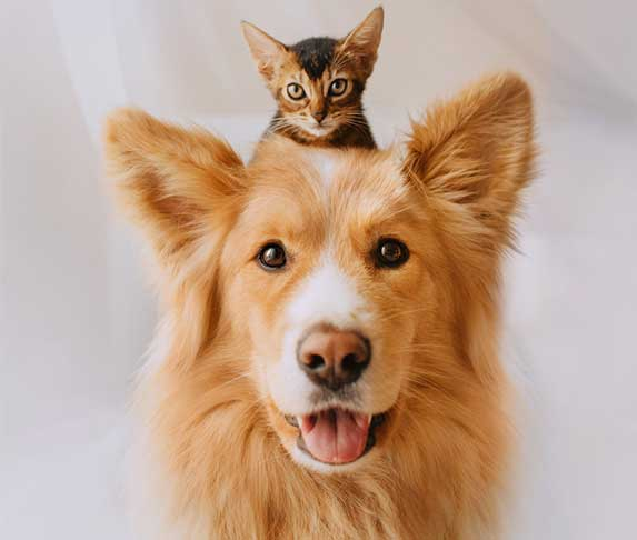 a dog and a kitten